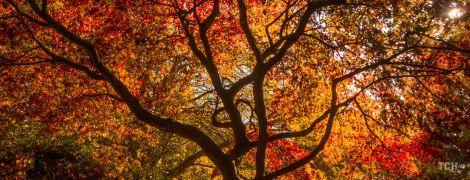 Гороскоп на 26 жовтня для всіх знаків зодіаку: день, коли важливо обрати правильну мету