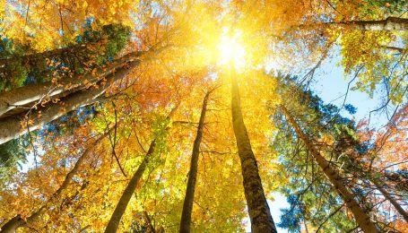 Гороскоп на 27 октября для всех знаков Зодиака: день, когда нельзя совершать плохие поступки
