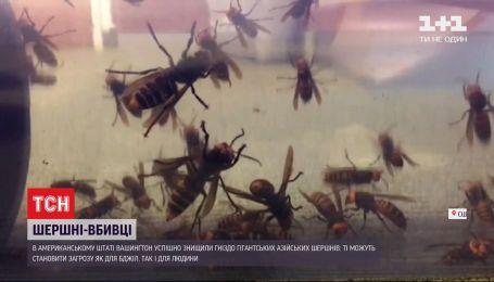 Шершни-убийцы: в США уничтожили гнездо гигантских насекомых