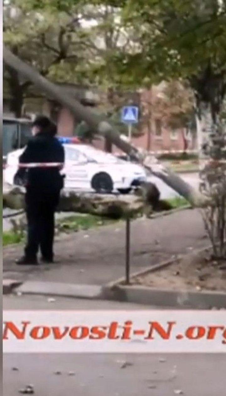 В Николаеве дерево упало на автомобиль, оборвало провода и повалило несколько электроопор