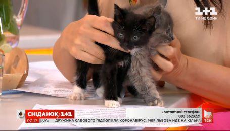 Симпатичні двомісячні кошенята чекають своїх господарів