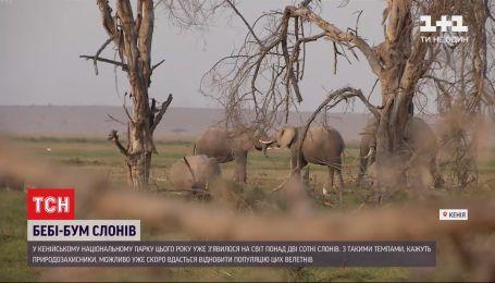 В национальном парке Кении в этом году родилось более 2 сотен слонов