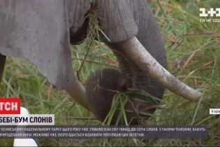 Рекордная рождаемость: в национальном парке Кении в этом году появилось более 2 сотен слонов