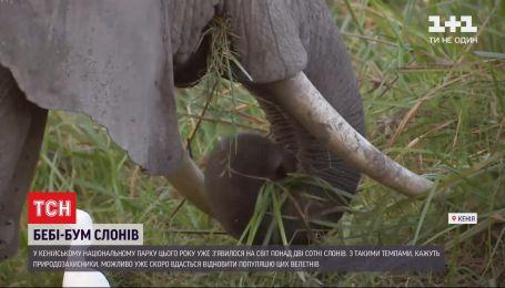 Рекордна народжуваність: у національному парку Кенії цьогоріч з`явилося понад 2 сотні слонів