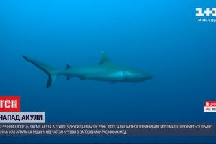 После нападения акулы на украинцев, власть Шарм-эль-Шейхе временно ограничила доступ к пляжам