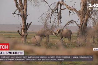 В Кении благодаря погоде появился шанс на полное восстановление популяции слонов