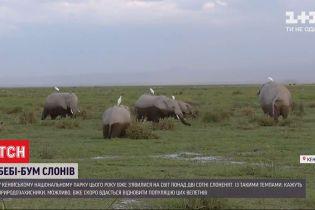 В нацпарке Кении за год родилось более 200 слонят