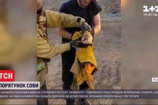 В Калифорнии пожарные спасли сову от лесного пожара