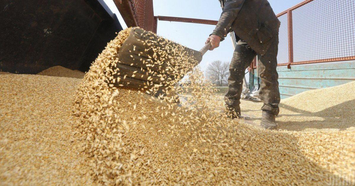 Отримає прибуток більший, ніж минулого року: на Україну чекає новий експортний рекорд зернових