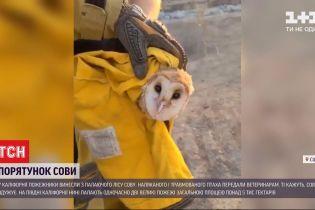 Пожежники у Каліфорнії врятували сову, яка опинилися у вогняній пастці