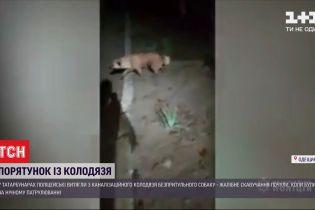 У Татарбунарах патрульні врятували пса, який провалився у каналізаційний колодязь
