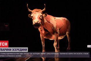 Мечта биолога: в Киеве пройдет выставка забальзамированных животных