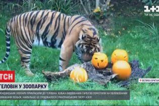 Лондонський зоопарк прикрасили до Геловіна