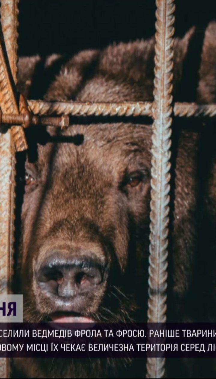"""В медвежий приют """"Домажир"""" переселили двух косолапых с гостинично-ресторанного комплекса"""