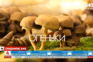 Опасная добыча: как отличить съедобные грибы от ядовитых