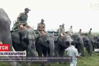 В индийском парке дикой природы восстановили сафари со слонами
