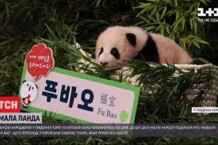 Першій народженій у Південній Кореї гігантській панді виповнилось 100 днів