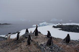Найбільший в світі айсберг може знищити колонії пінгвінів і тюленів