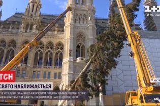 У центрі Відня встановили найвищу за усю історію міста новорічну ялинку