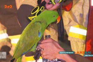 Как попугай спас жизнь человека в Австралии