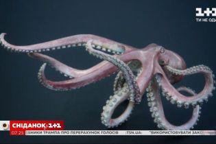 Интересные факты об осьминоге – Поп-наука