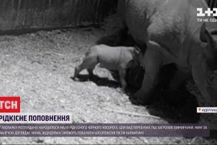 Редкое пополнение: в нидерландском зоопарке родился черный носорог