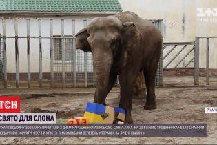 Харьковский зоопарк показал, как отметил день рождения слона