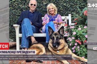 Вместе с новым президентом США в Белом доме может поселиться собака
