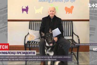 Вірний прихильник Байдена: що відомо про собаку, який може вперше оселитися у Білому домі