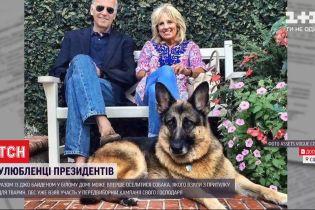 Улюбленці президентів: родина Байдена може повернути до Білого дому собак