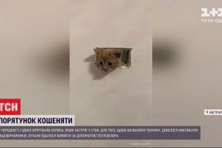 В передмісті Сіднея врятували кошеня, яке застрягло у стіні