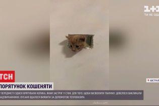 В пригороде Сиднея со стены вытащили котенка