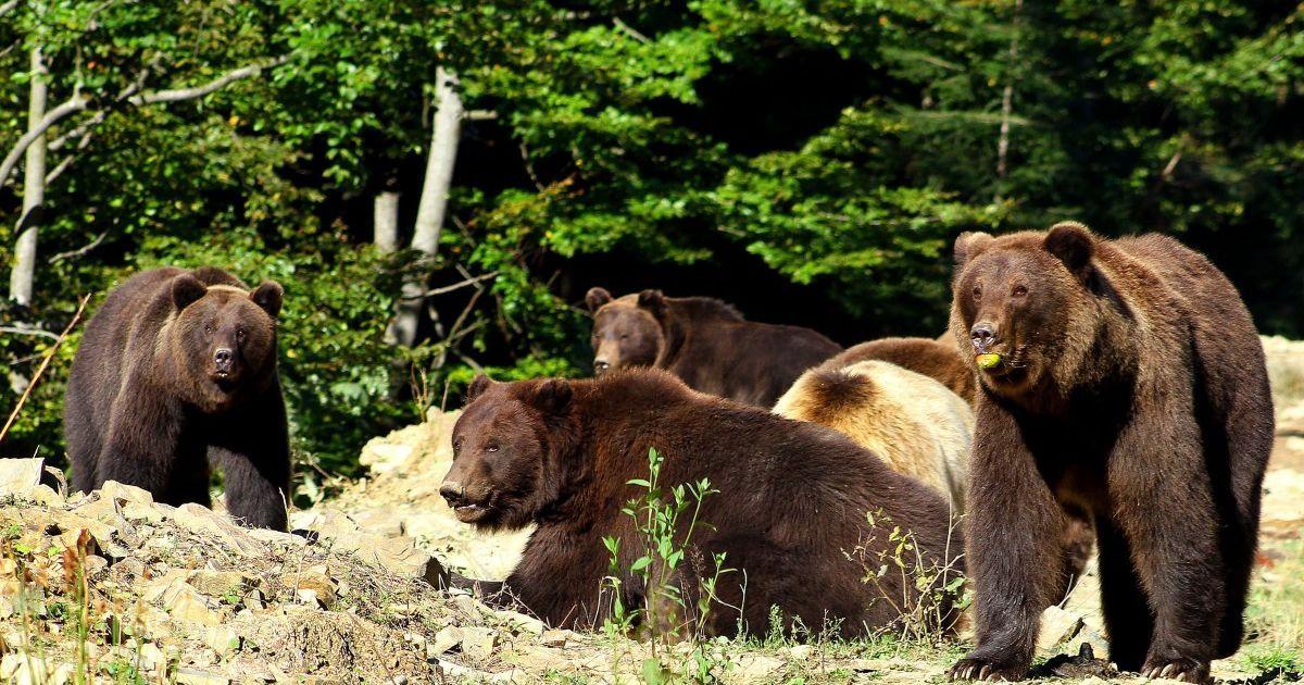 """Сдай бутылку — посети медведей: в нацпарк """"Синевир"""" можно попасть бесплатно в обмен на мусор"""