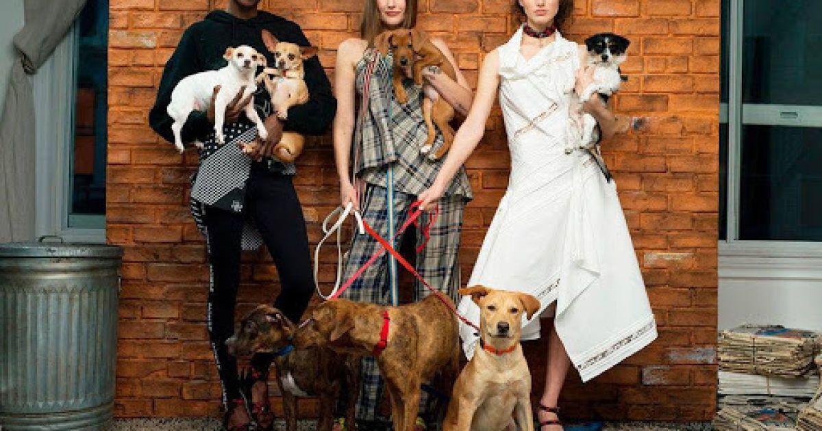 Безпритульний собака із Запоріжжя став моделлю модного американського глянцю (фото, відео)