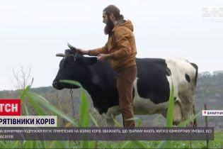 У Вінницькій області подружжя рятує приречених на бойню корів