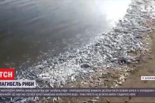 Гибель рыбы: в лимане Запорожской области обнаружили десятки тысяч особей хамсы