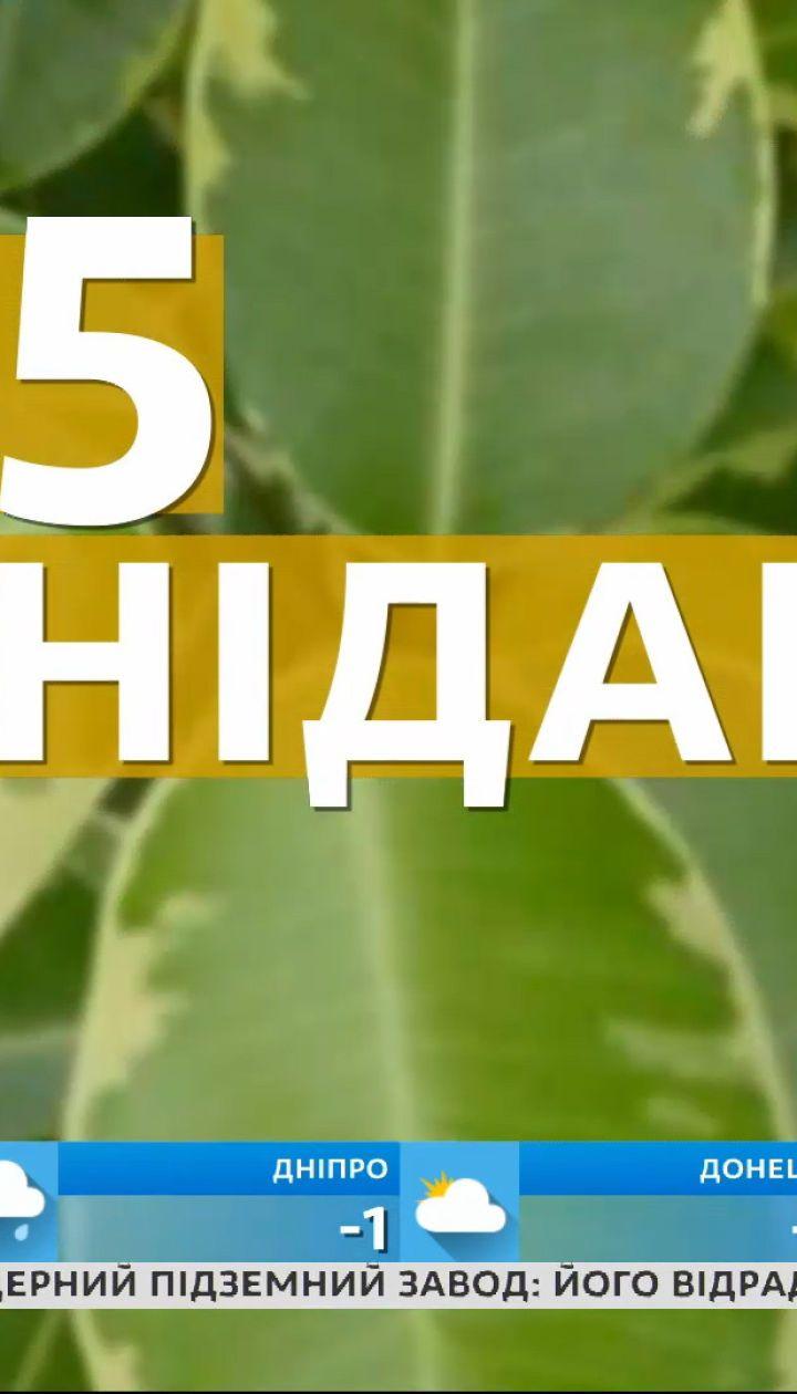 Домашние растения, которые способны лечить
