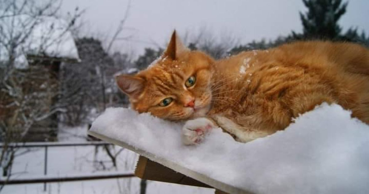 Зима близько: Україну накриває снігом