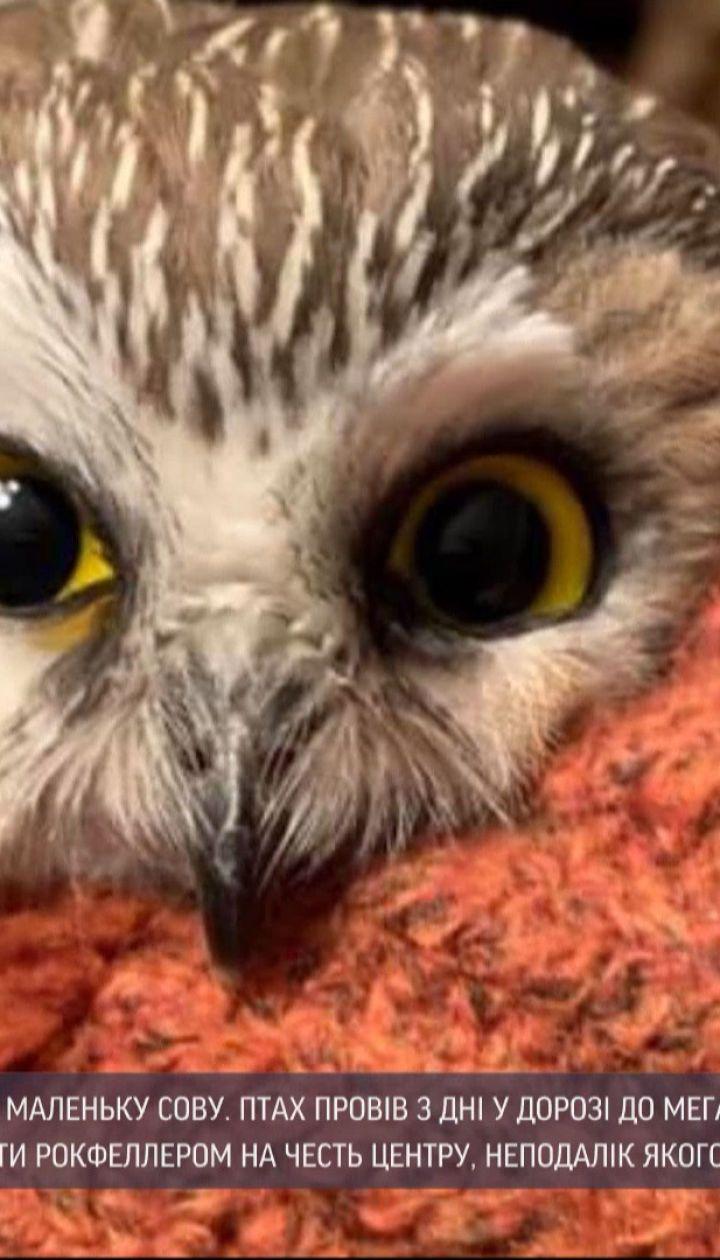 В самой популярной елке Америки нашли маленькую сову