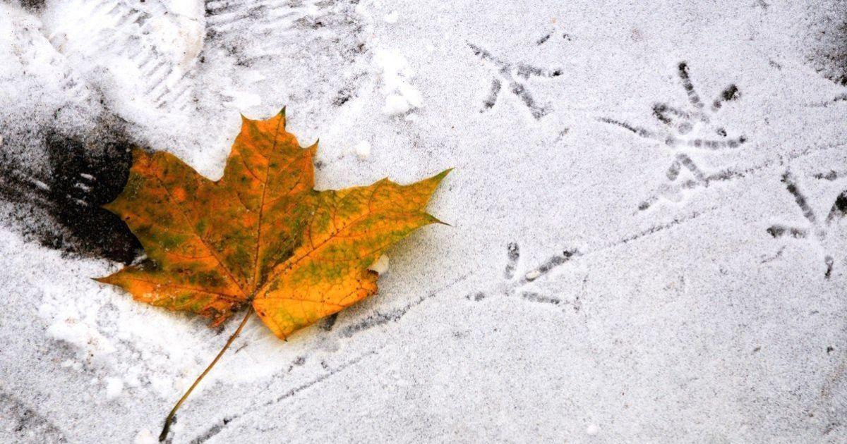 Прогноз погоди на 30 листопада: в Україні буде мокрий сніг, на дорогах - ожеледиця
