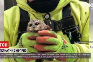У центрі дикої природи відгодовують маленьку сову, яку знайшли у гілках найпопулярнішої ялинки США