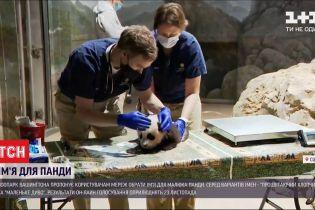 Зоопарк Вашингтона влаштував онлайн-голосування за краще ім'я для малюка панди