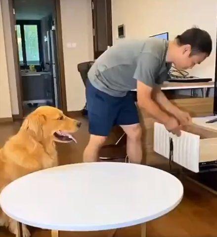 пес-розумник_1