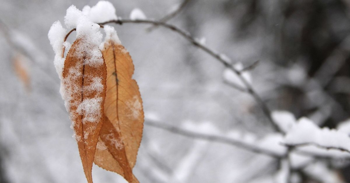 В Україні буде морозяно і вітряно, подекуди сніжитиме: прогноз погоди на 22 листопада