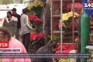 У Мексиці перед Різдвом відкрились традиційні квіткові базари