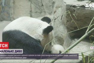 """Панду, народжену три місяці тому у Вашингтонському зоопарку, назвали """"Маленьке диво"""""""
