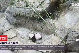 Маленьке диво - так назвали новонароджену панду у зоопарку Вашингтона