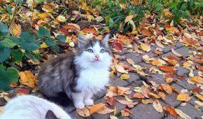 У Броварах кошенята з очима кольору неба шукають дім: фото