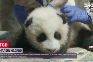 У Вашингтонському зоопарку обрали кличку для народженого три місяці тому панденяти