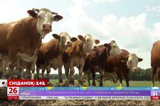 Молочная продукция в Украине подорожает – экономические новости
